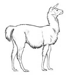 llama coloring pages llama color page argentina animal templates