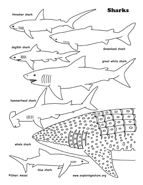 shark pictures to color sharks coloring page