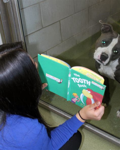 reading to dogs read to dogs through new dallas animal services program dallas city news