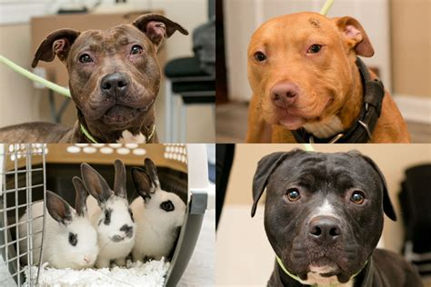 dog house thorndale pa state police arrest chester county man on dogfighting