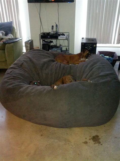 lovesac dog bed apparently an 8 foot 120lb diameter lovesac is just an