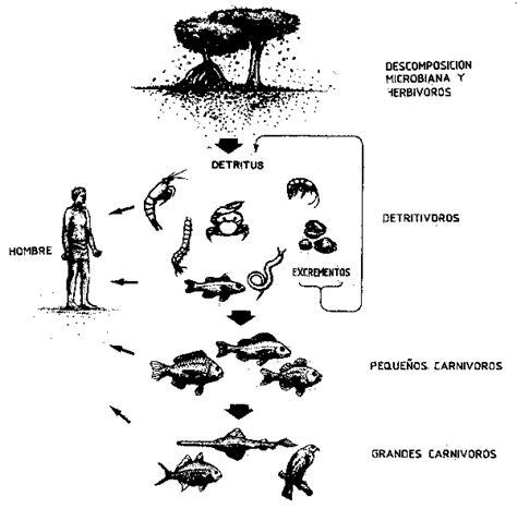 cadenas troficas introduccion din 225 mica de los ecosistemas y 225 reas protegidas