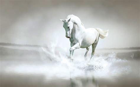 wallpapers hd fondos de pantalla de caballos varias im 225 genes y fondos de caballos fondos de pantalla y mucho m 225 s