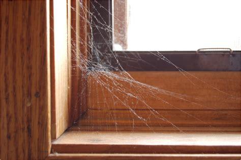 web house spider webs spidersrule
