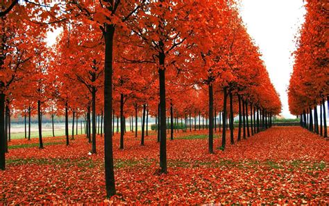garden amazing admirable seasonal wallpapers  desktop