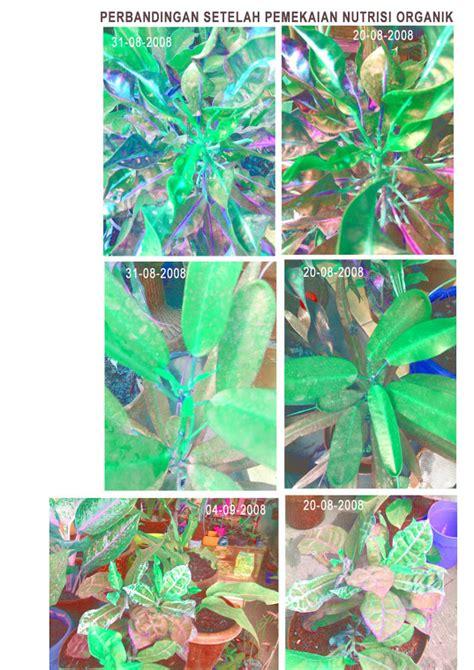 Pupuk Kalsium Bubuk pupuk organik tanaman organik untuk tanaman
