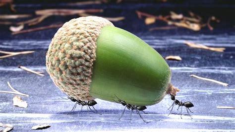 Wie Wird Ameisen Los 3756 wie wird ameisen los wie wird kleinen ameisen