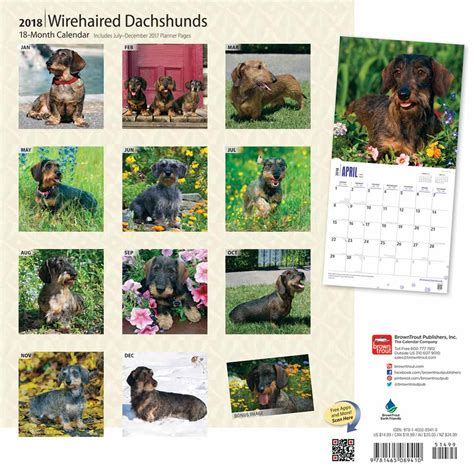 doxie calendar 2018 books wirehaired dachshund calendar 2018