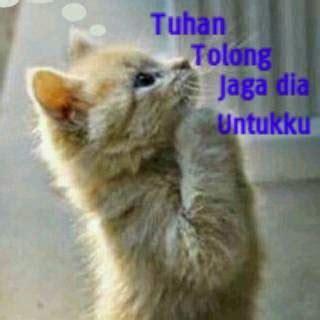 gambar kucing lucu untuk komentar dulayex