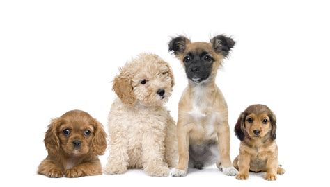 different puppies different types of breeds quotes