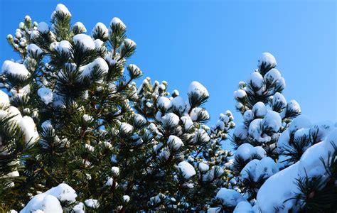 193 rboles de navidad abstractos brillantes hermosos foto de arbol navidad nieve da festivos ao nuevo rbol de navidad