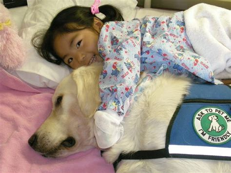 for dogs to be a therapy pet therapy your best friend llc your best friend llc