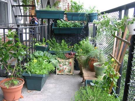 balcony kitchen gardening ideas for limited space blog balcony kitchen gardening ideas for limited space blog