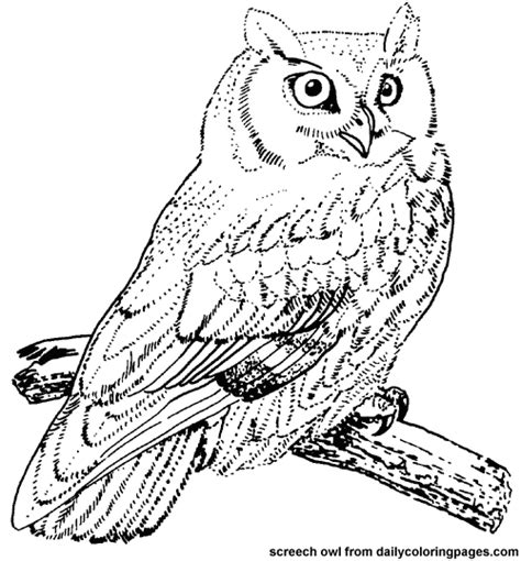 Realistic Owl Coloring Page | up north with mel owl doodle