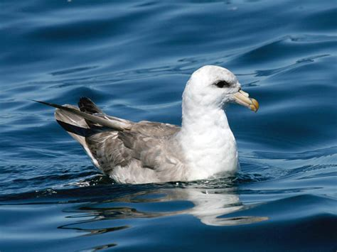 oregon seabirds november 2012