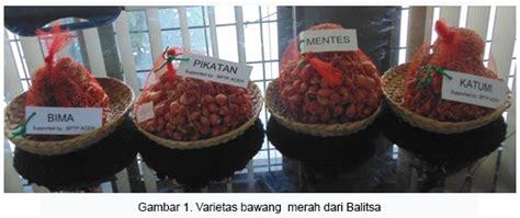 Benih Bawang Merah Nganjuk penangkar benih atau bibit bawang merah 171 suplier bibit