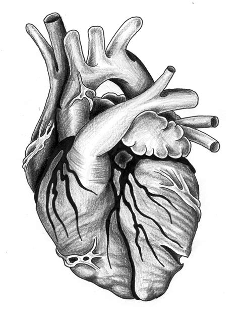 heartbeat tattoo drawing a black heart clipart best