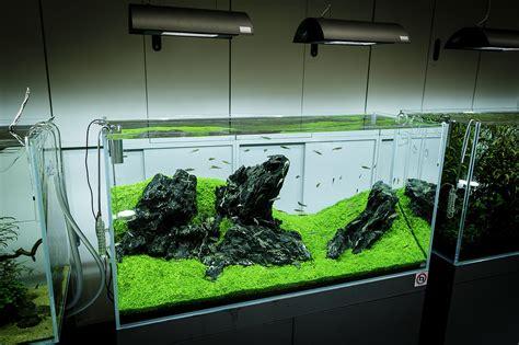 aquarium design criteria ada nature aquarium gallery beautiful moments of the