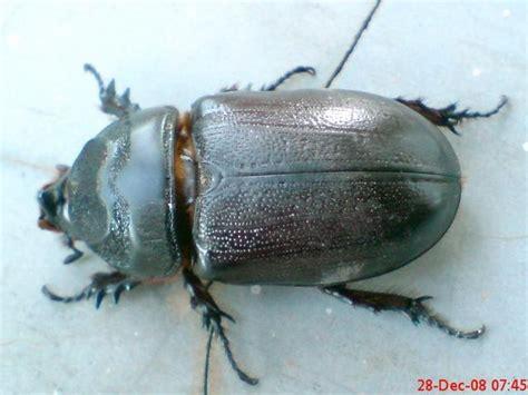 pangkahbulat kumpulan serangga terbesar
