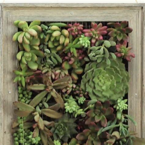 turn plants into with this diy vertical garden