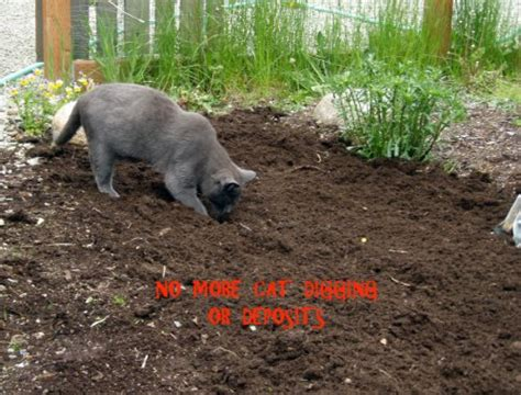 keep cats in backyard 1 cat repellent get rid of cats now keep cats away from