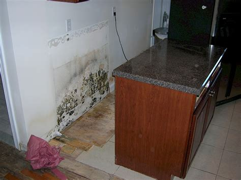 Mold Under Kitchen Cabinet Mold Under Bed Mold Under