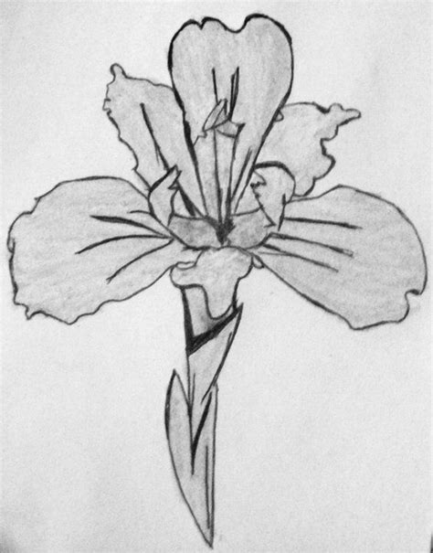 black iris tattoo iris iris birth month flower february drawings