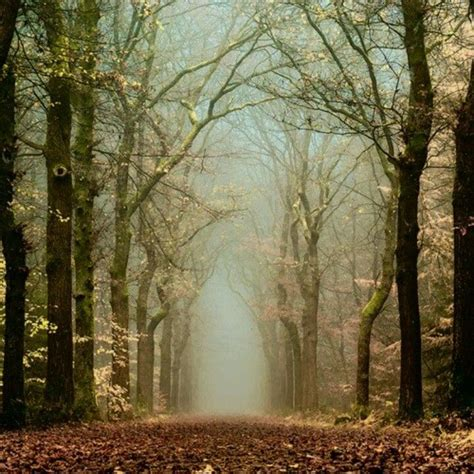 mystic forest netherlands so many things to see