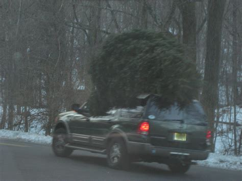 car with tree image top 10 cars to move a tree tdudt