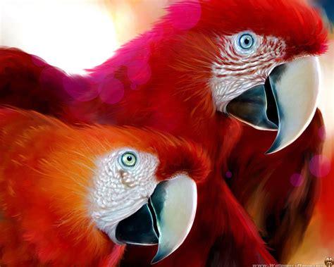 imagenes animales hermosos imagenes de animales hd im 225 genes taringa