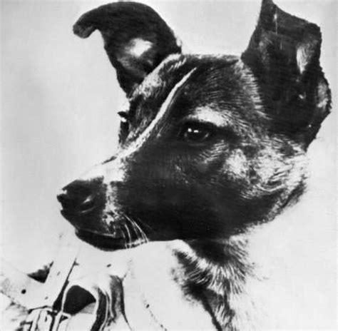 dog star scientist recalls training laika  space