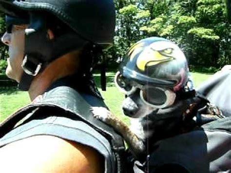puppy helmet helmets motorcycle helmet dogs motorcycles