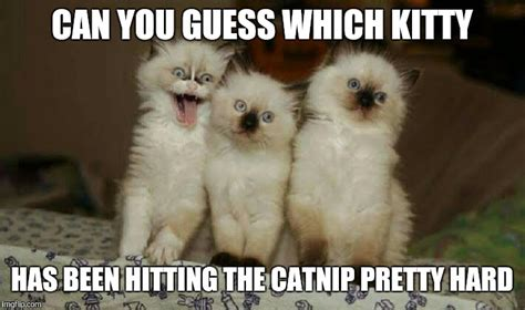 Meme Kitty - 20 super duper cute and funny kitty memes sayingimages com