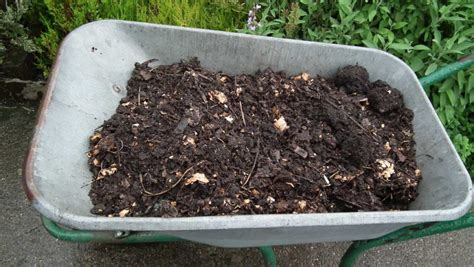 Garden Syari Best Quality compost top tomatoes poetry allotment garden diary