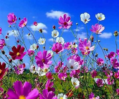 beautiful flowers image beautiful flower android apps on google play