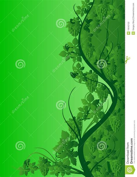 abstract vine pattern green vine pattern stock photography image 19042122
