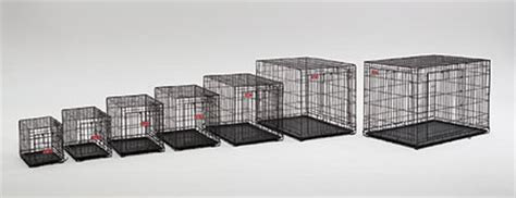 what size crate for golden retriever crates for golden retriever what size dogs in our photo