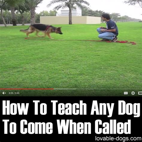 how to a puppy to come lovable dogs how to teach any to come when called lovable dogs