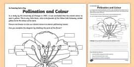 Pollination Worksheet Ks2 by Seed Dispersal Sorting Activity Seed Dispersal Seed