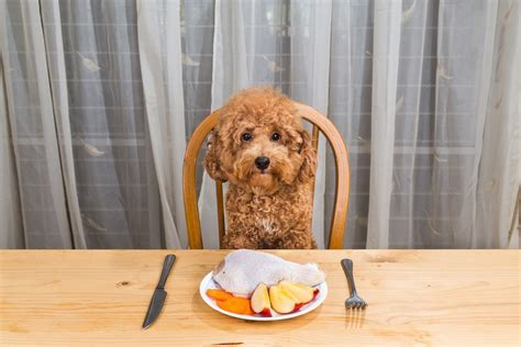 can you give dogs turkey 15 of the healthiest foods you can give to your page 2
