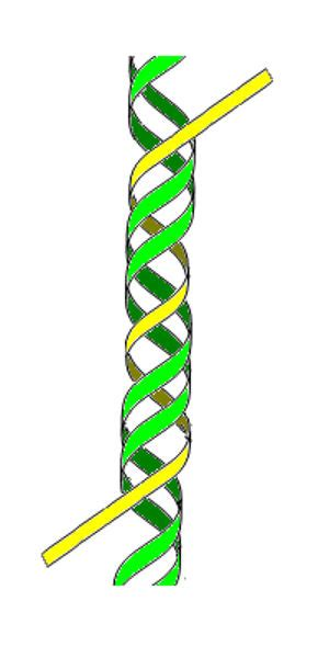 triple helix dna scientists create cyborg dna