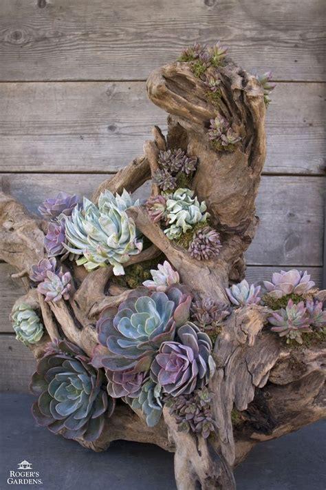 unique planters for succulents 17 unique succulent planters that can make a statement