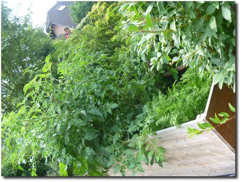 wann garten bepflanzen pflanzen f 252 r hochbeet hochbeet bauanleitung f r chili