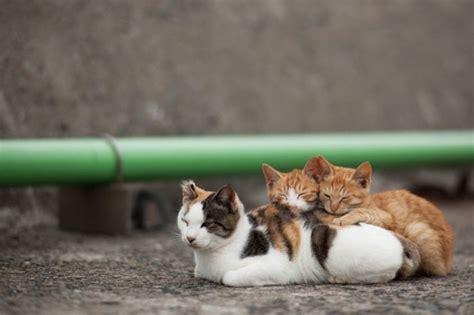 cat island japan cat heaven island in japan 50 pics
