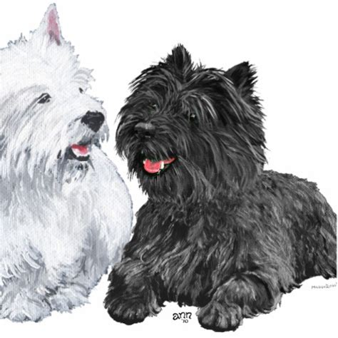 black west highland terrier puppies for sale the gallery for gt west highland terrier puppies black