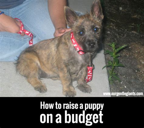 how to raise a puppy our gentle giants 187 how to raise a puppy on a budget