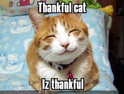 Thanksgiving Cat Meme - 34 reasons to be thankful dusty rainbolt s universe