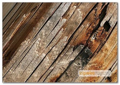 wood pattern brush huge collection of photoshop brushes patterns shapes and