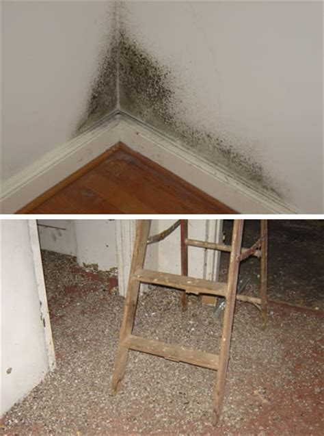 mold in the house are molds dangerous in the house charlottesville mold inspections and testing