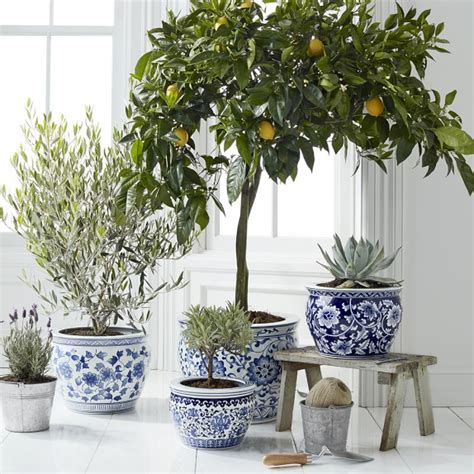 Blue White Ceramic Planter Large Williams Sonoma Blue And White Planters